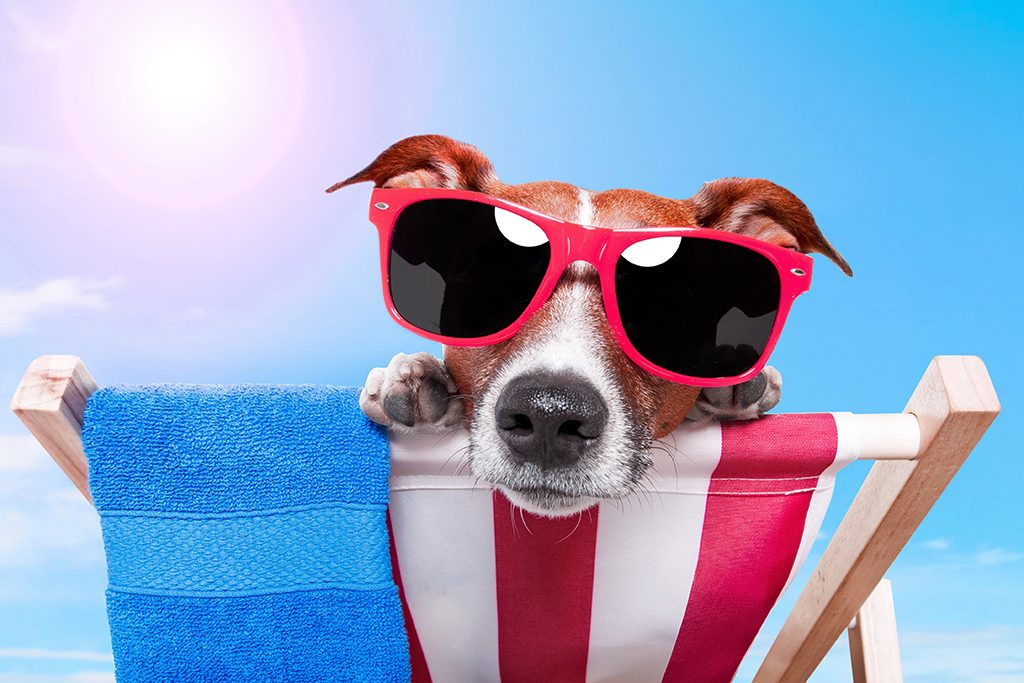 como cuidar do seu pet no verão